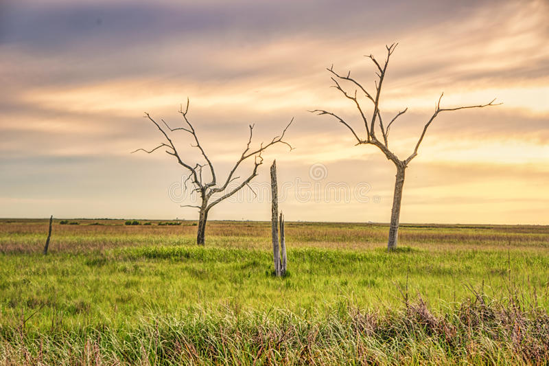 Goldene Wiese, Louisiana lizenzfreie stockfotografie