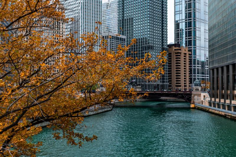 Goldener Autumn Tree durch den Chicago River und die Wolkenkratzer stockfoto