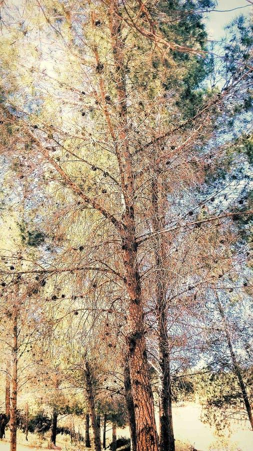Goldener Baum stockfotos