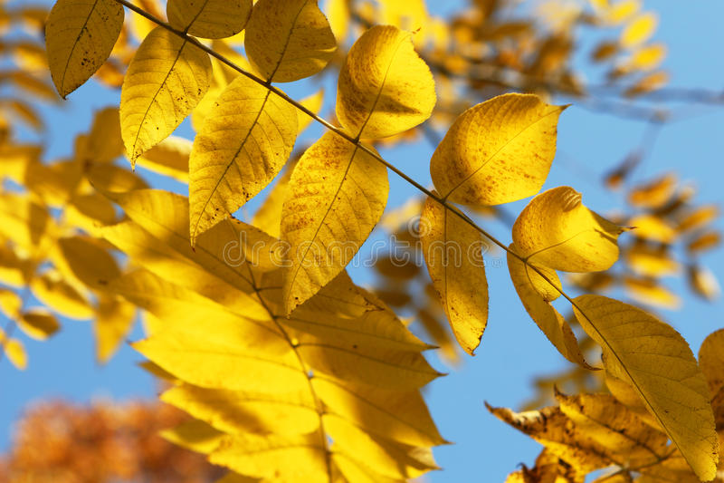 Goldener Blathintergrund lizenzfreie stockfotografie
