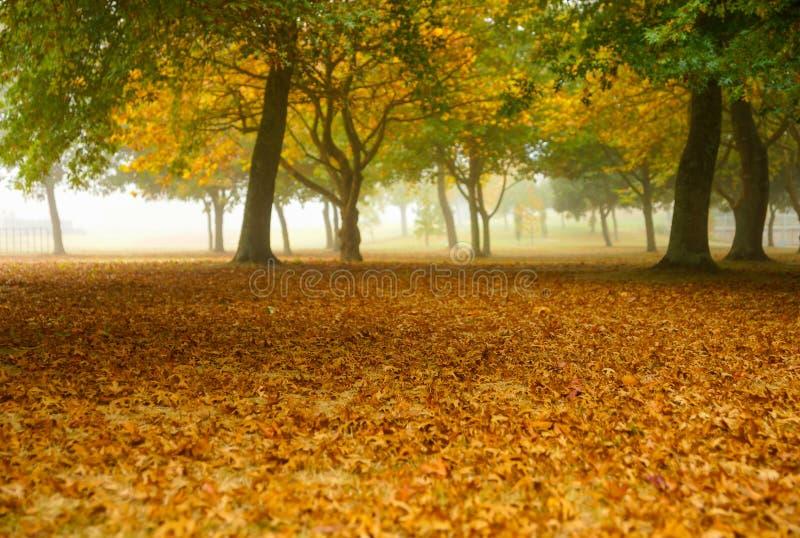 Goldener Eichenblatt-Abdeckungsboden unter der Waldung des Baums eingehüllt stockbilder