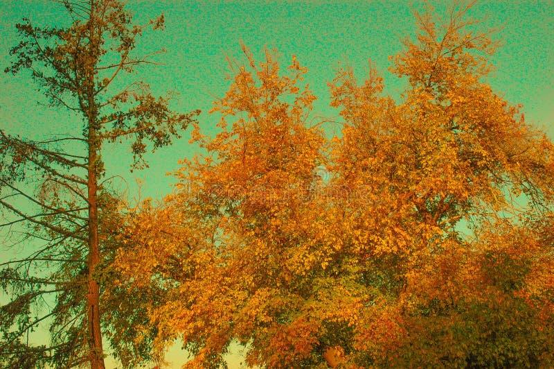 Goldener Herbst lizenzfreies stockbild