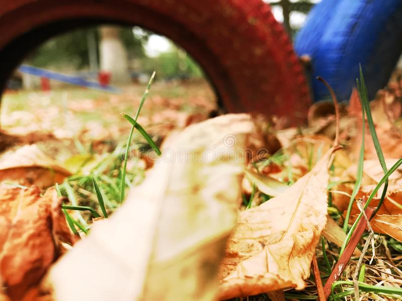 Goldener Herbst stockfoto