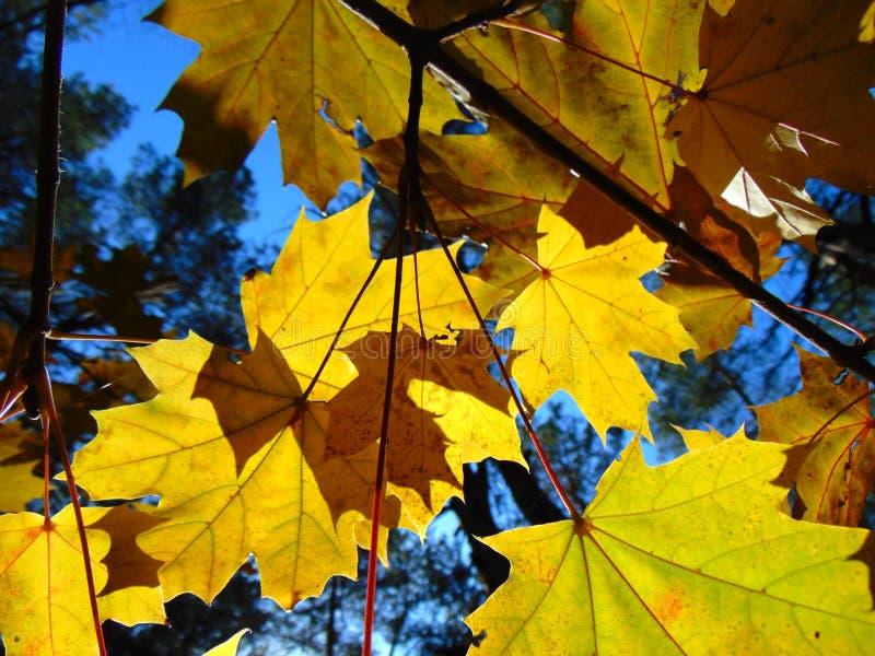 Goldener Herbst lizenzfreie stockbilder