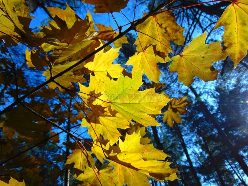 Goldener Herbst lizenzfreie stockfotografie