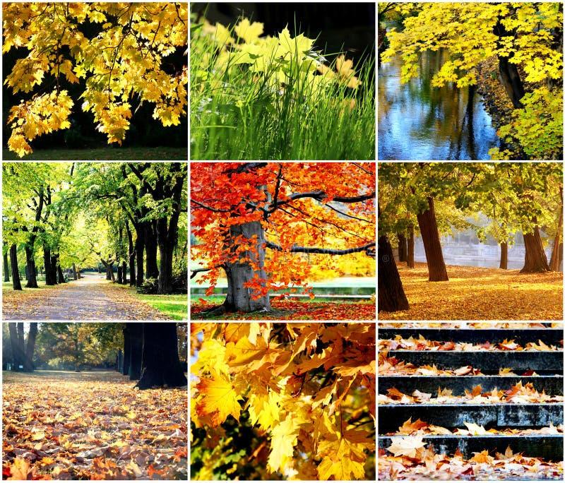 Goldener Herbst stockfotografie