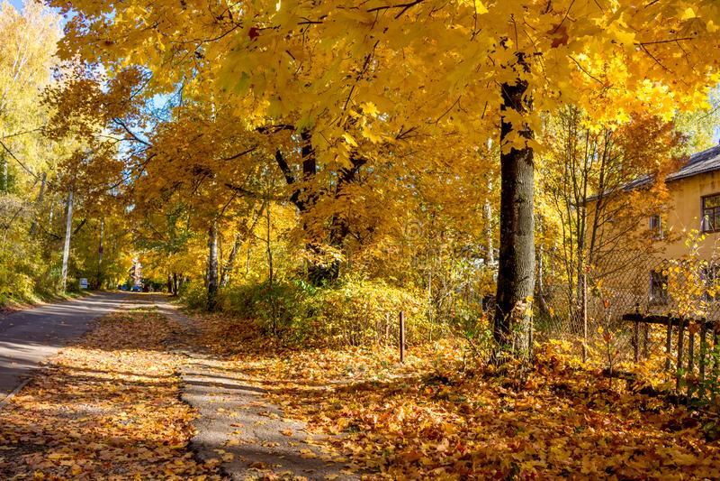 Goldener Herbst in der Stadt lizenzfreie stockfotografie