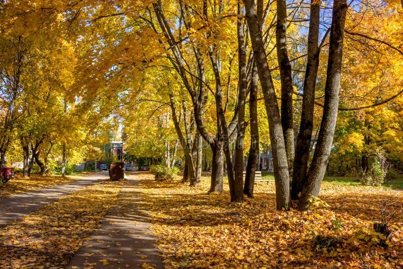 Goldener Herbst in der Stadt stockbild