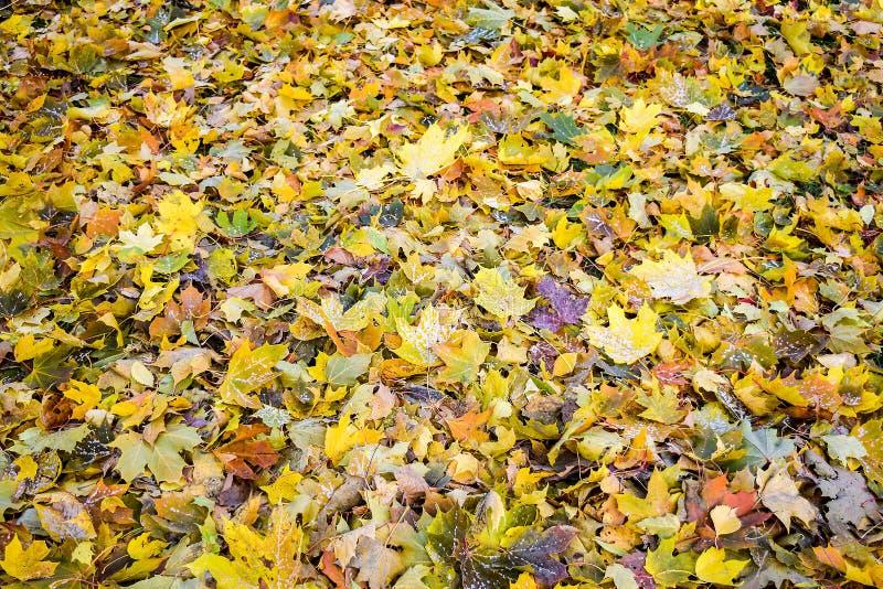 Goldener Herbst Die Blätter am Boden lizenzfreie stockfotos
