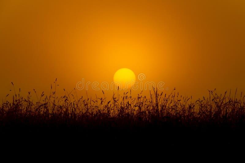 Goldener Sonnenaufgang stockbilder