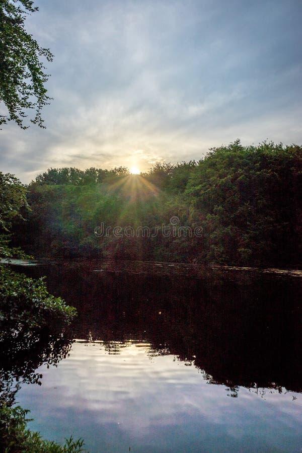 Goldener Sonnenuntergang über Bäumen in Haagse-Bos, Wald in Den Haag stockbilder