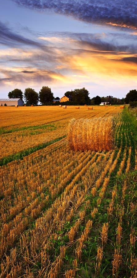 Goldener Sonnenuntergang über Bauernhoffeld stockfotografie