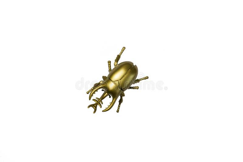 Goldener Wanzenscarabäus auf weißem Hintergrund lizenzfreies stockfoto