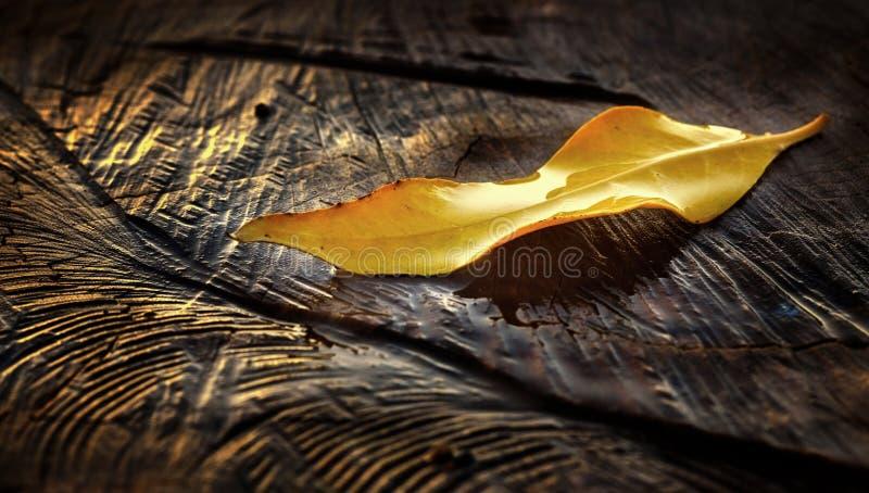 Goldenes Blatt stockfotos