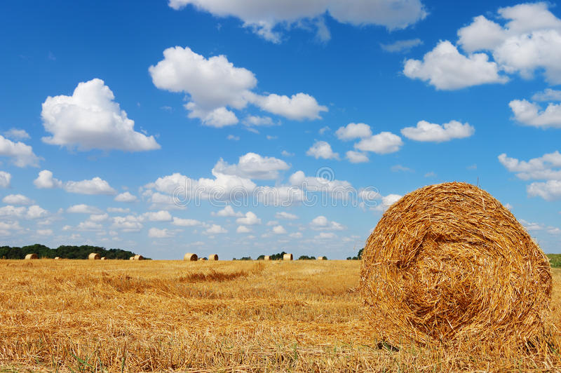 Goldenes Feld mit Heuballen gegen einen bewölkten Himmel lizenzfreie stockfotografie