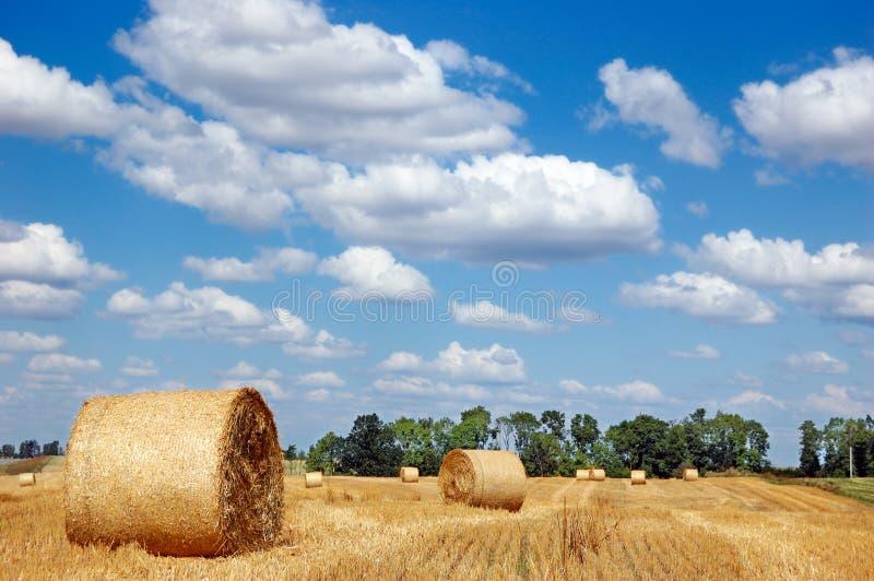 Goldenes Feld mit Heuballen gegen einen bewölkten Himmel stockbild