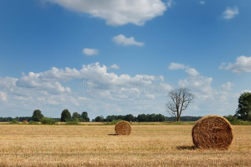 Goldenes Feld mit runden Heuballen und totem Baum stockbilder