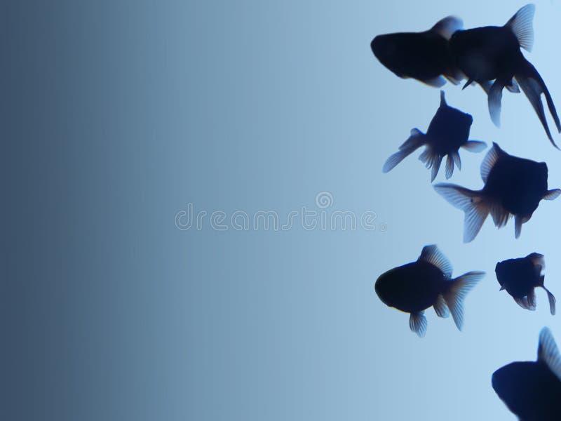 Goldenes Fischschattenbild stockfotos