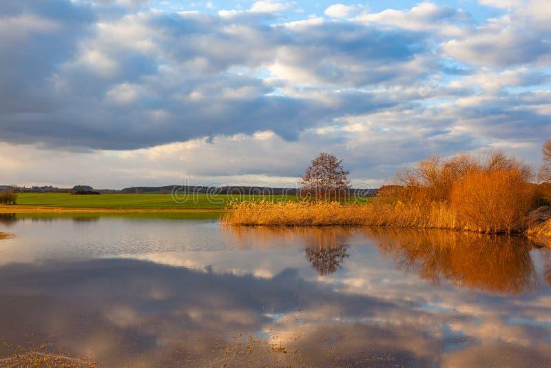 Goldenes Herbstgras auf dem See lizenzfreies stockfoto