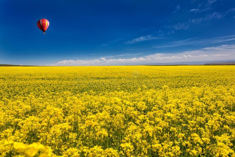 Goldenes Meer von Blumen lizenzfreie stockfotos