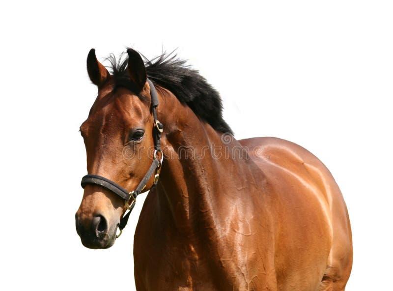 Goldenes Pferd stockbilder