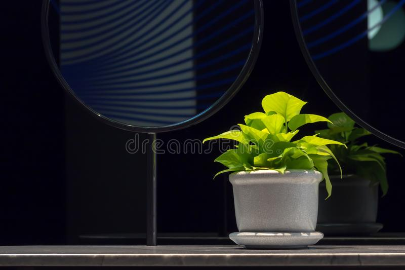 Goldenes pothosEpipremnum aureum in einem Porzellantopf auf Badezimmerzähler nahe bei Spiegel mit Kopienraum Der Efeu des Teufels stockfotos