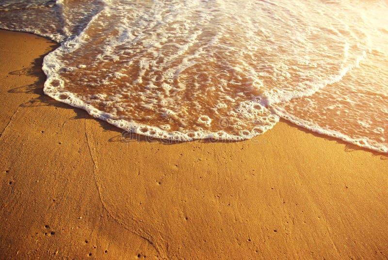 Goldenes Seeufer stockbilder