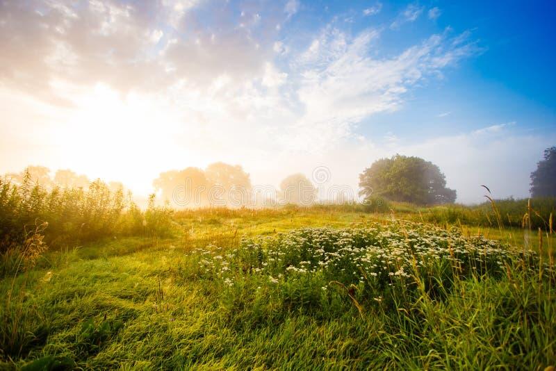 Goldenes Sonnenlicht über grüner Wiesenlandschaft stockfotografie