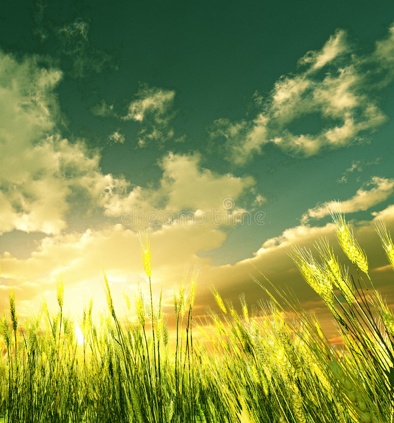 Goldenes Weizenfeld lizenzfreie abbildung