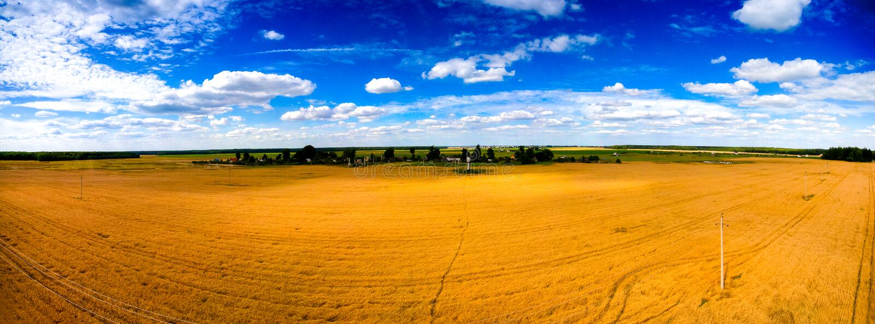 Goldenes Weizenfeld mit blauem Himmel oben RAUM FÜR BEDECKUNGSschlagzeile UND TEXT stockbild