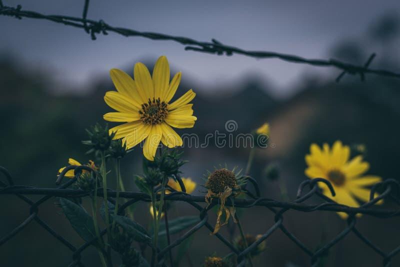 Goldenes Weizenfeld und sonniger Tag lizenzfreie stockfotos