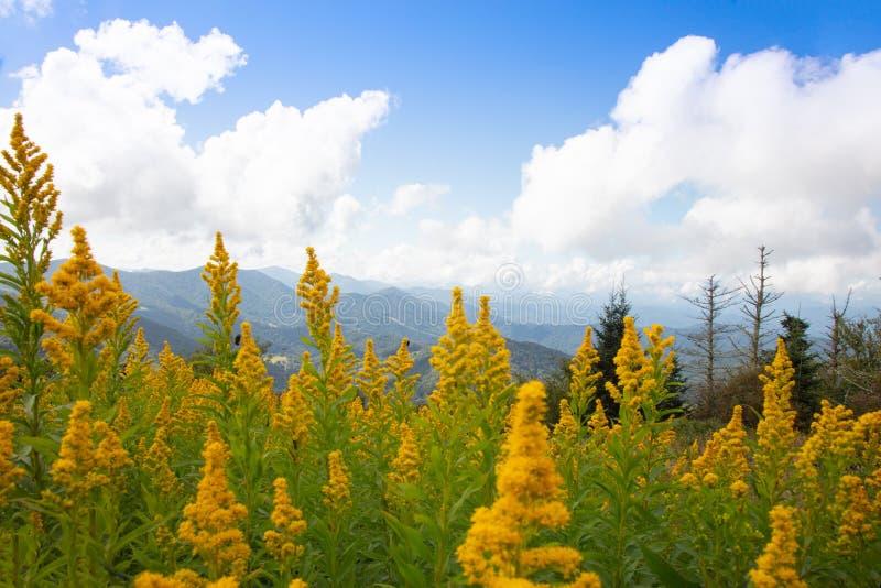 Goldenrod och berg på runda blir skallig royaltyfria foton