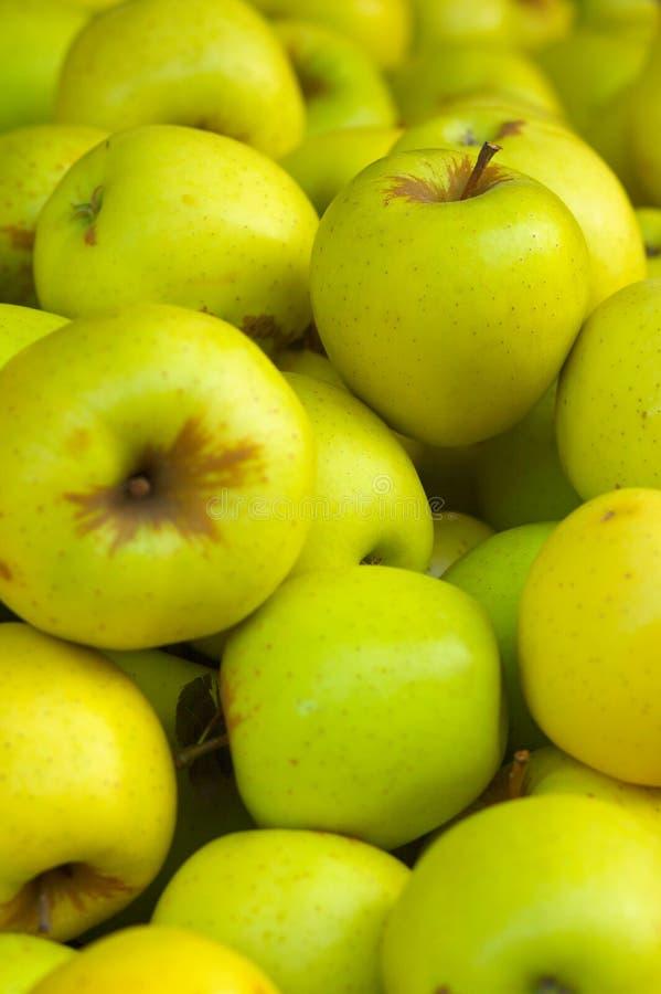 Goldent köstliche Äpfel lizenzfreie stockfotografie