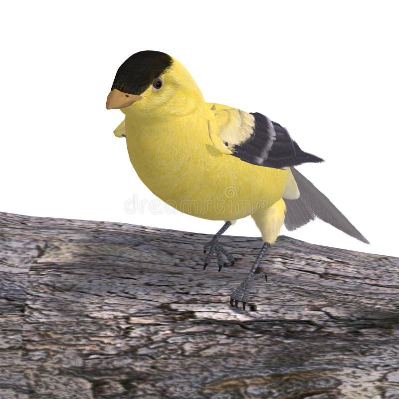 Goldfinch maschio illustrazione di stock