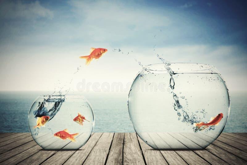 Goldfisch, der auf besseren Platz sich bewegt stock abbildung
