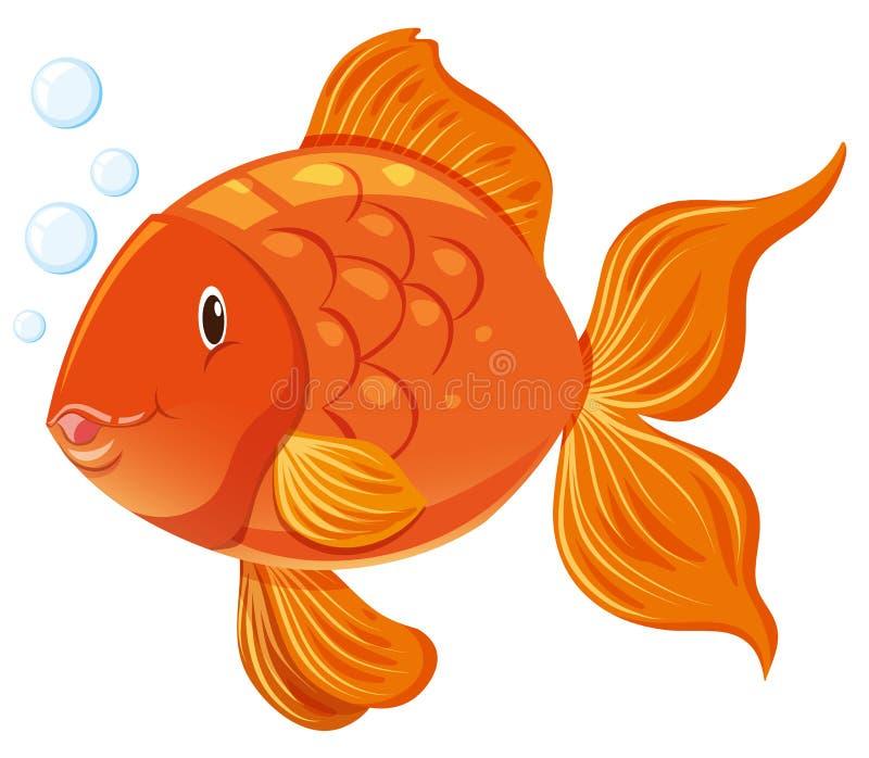Goldfisch mit glücklichem Gesicht lizenzfreie abbildung