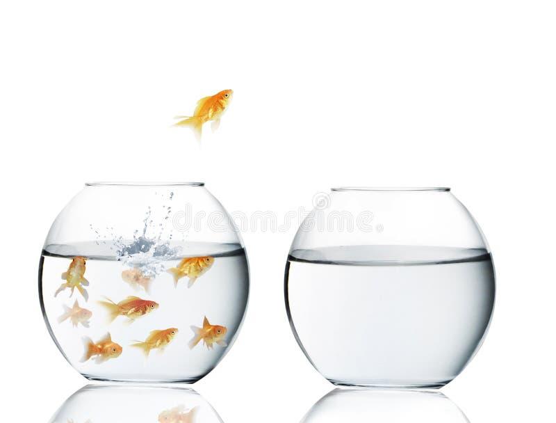 Goldfischherausspringen des Wassers stockfotografie
