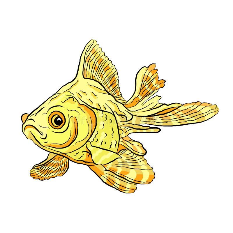 goldfish ενυδρείο με τα ριγωτά πτερύγια ελεύθερη απεικόνιση δικαιώματος