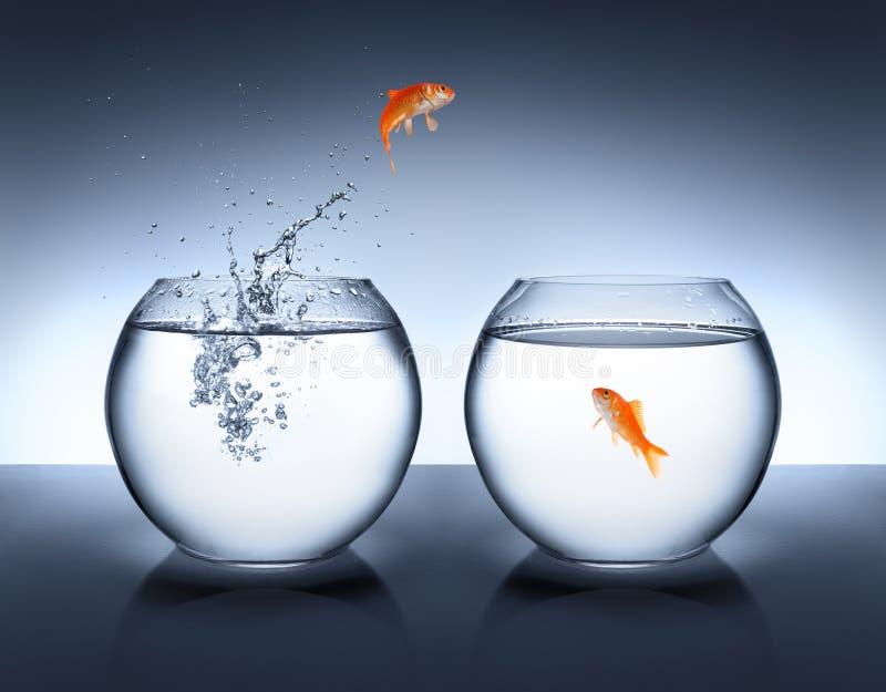 Goldfish που πηδά από το νερό - αγάπη στοκ εικόνα