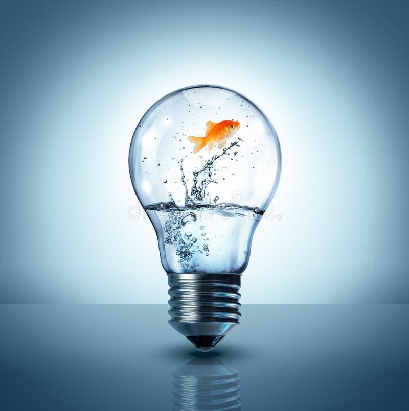 Goldfish που πηδά μέσα στον ηλεκτρικό βολβό στοκ εικόνες