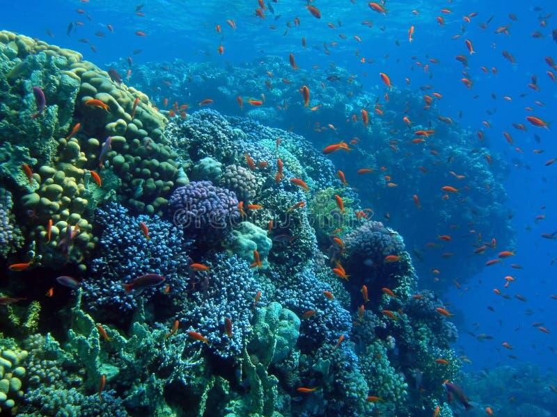 goldfish города стоковое изображение rf