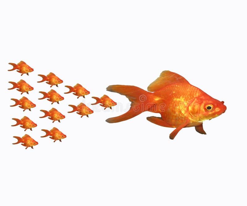 goldfish семьи стоковое фото
