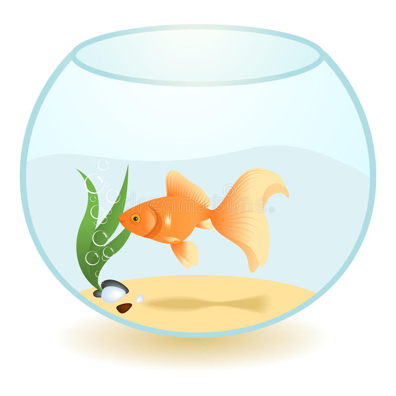 Goldfish libre illustration
