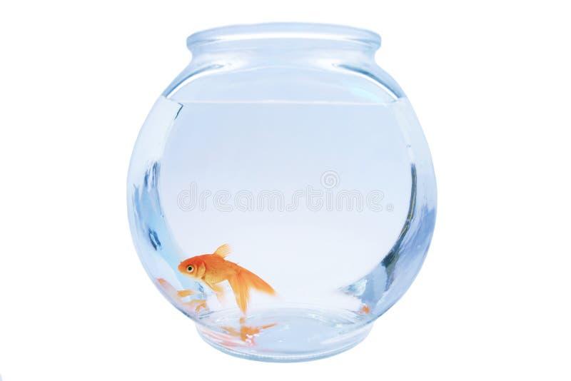 goldfish стоковые фото