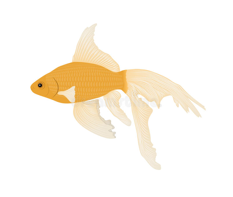 Download Goldfish stock vector. Image of fins, exotic, fulfill - 23194178