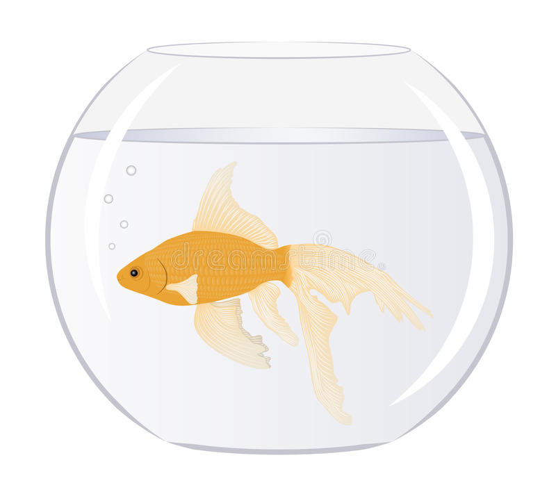 Goldfish Obraz Stock