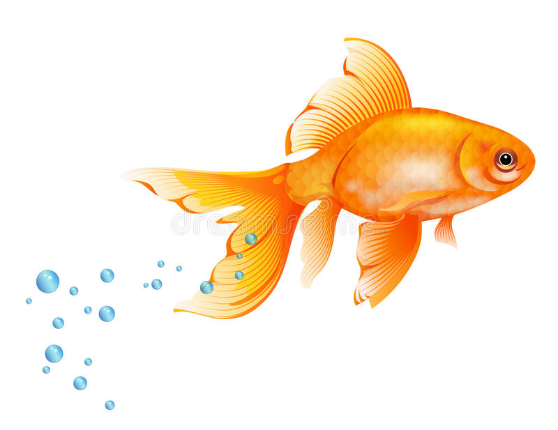 Goldfish royalty free illustration
