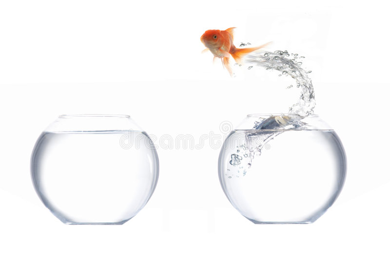 Download Goldfish stock image. Image of flying, isolated, fishbowl - 3534583