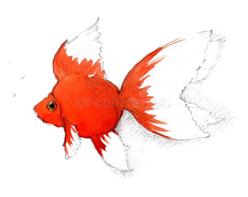 Download Goldfish stock illustration. Image of aquatic, watercolor - 7775101