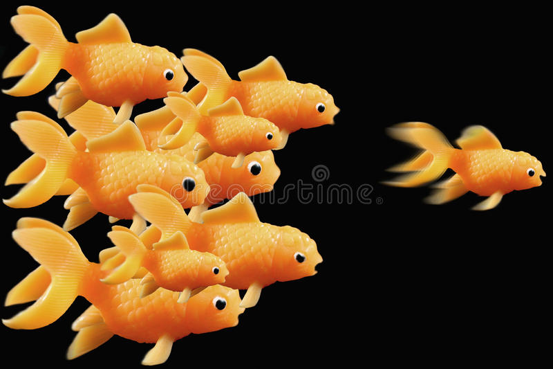 Goldfish ahead of the race stock photography